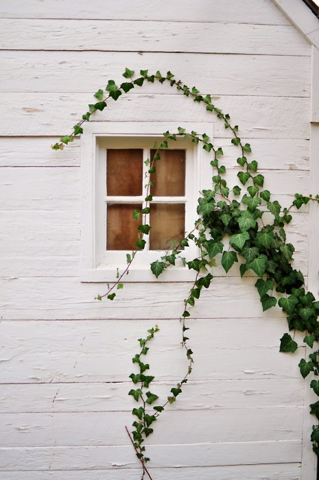 source: Anna Gillar ~ beautiful ivy