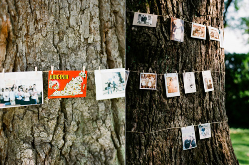 postcards and polaroids as wedding decor