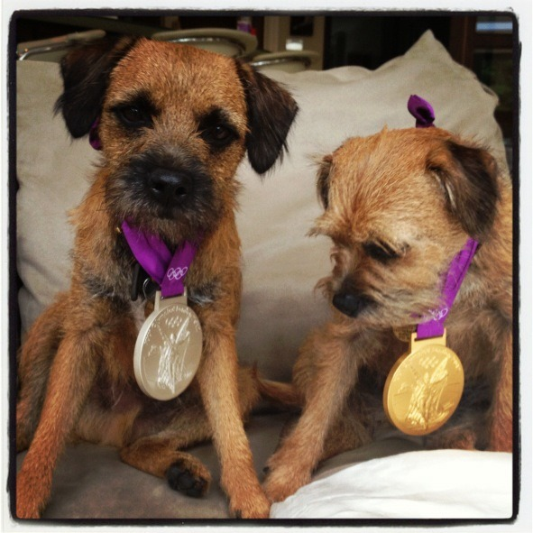 olympics:  Olympic Pups   Aww