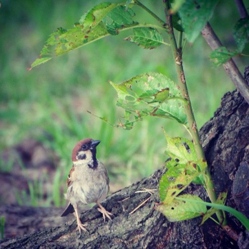 Look up sparrow #japan #tokyo #bird #sparrow  (Instagramで撮影)