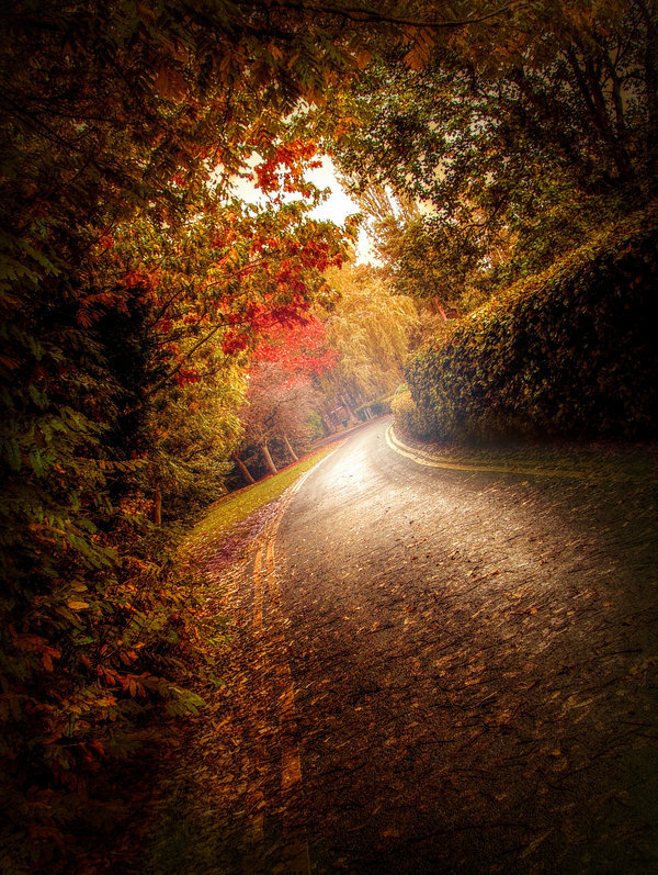 lori-rocks: Autumn Road By 4420