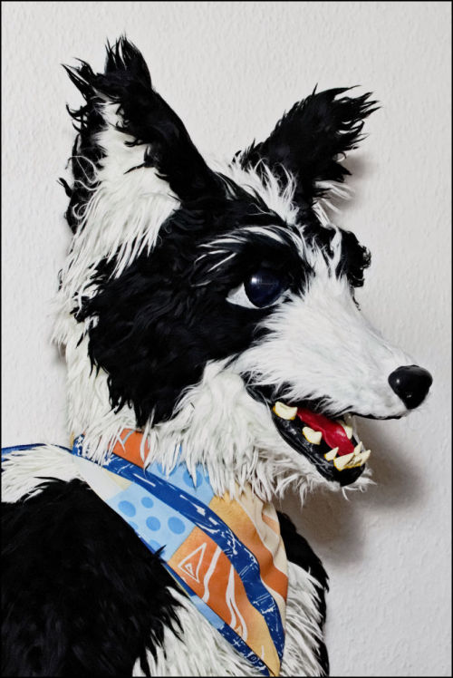 My border collie fursuit Marlo
