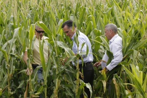 "Funny photo of Mitt lost in a cornfield, accompanying a Wash. Post article about his tax returns. Why'd his campaign allow such a ridiculous image to be made of their candidate? Ive blogged about his latest reason for not releasing his returns: ""I'm not a business."" Reading that, I thought, ""Hey, what happened to 'Corporations are people, my friend!'"" Photo credit: Charles Dharapak / AP"