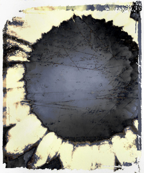 sunflower 4       jack barnosky