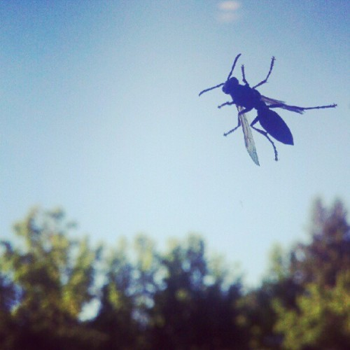 Bug's life (Taken with Instagram)