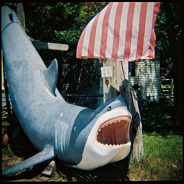Shark! on Flickr.Via Flickr: Salisbury, Mass., June 2012.