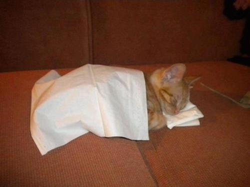 ofdarklands:   browneyedcunt:   jillstrif:     Kell fell asleep on the couch one night so we gave him a pillow and a blanket Which we made out of kleenex because we always have those around on our coffee table for when we watch feely stuff   MY HEART   doesn't even go with my blog but i can't scroll past this without regretting not reblogging it.   #how does a cat with a kleenex pillow 'not go with your blog'#what the fuck are you doing with your life