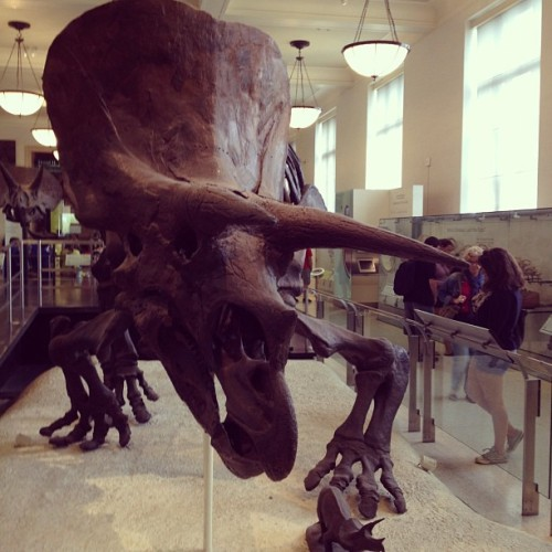 Triceratops.  (Taken with Instagram at American Museum of Natural History)