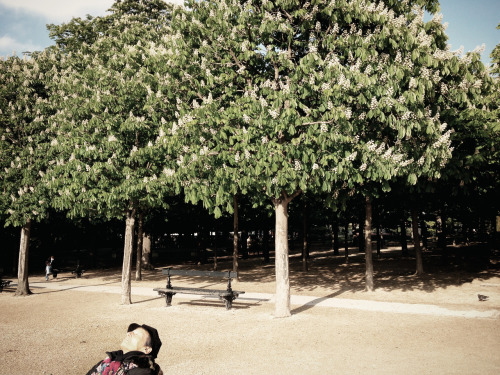 """Sunning in Jardin du Luxembourg, 3 P.M."" - Photographer Alistair Taylor-Young"