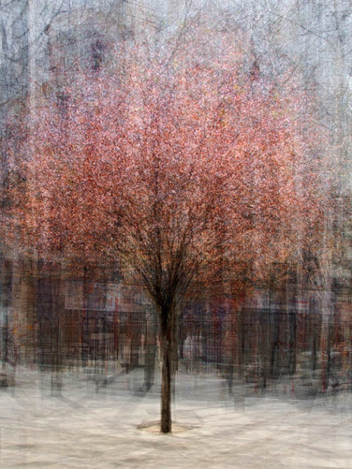 artchipel:  Pep Ventosa - In the Round - Trees [artist found at atavus]