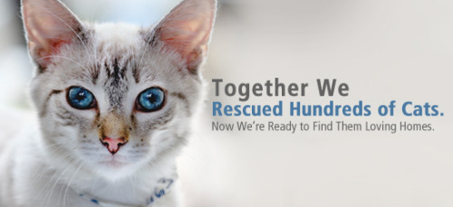 We Rescued Hundreds. Please Rescue Just One. Are you ready to adopt some kitties? We sure hope so—we've got hundreds of cats looking for loving homes in the Sunshine State. Start Here!
