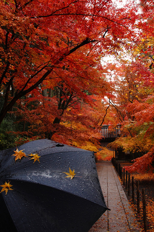 Autumn walk in Nagaokakyō, Kyoto, Japan.