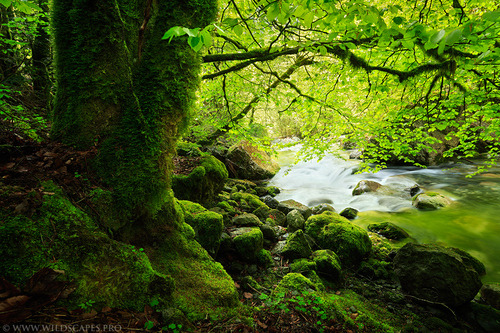 "moonlit-nymph:  500px / Photo ""Green Riverside"" by Maxime Courty on We Heart It. http://weheartit.com/entry/34640397"