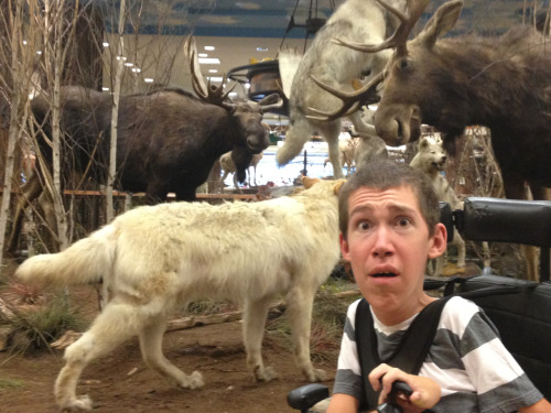 laughingatmynightmare:  In this picture you see a moose trying to attack me while being attacked by a pack of wolves. This all happened in the Harrisburg mall today. I'm lucky to have made it out alive; many were not so fortunate.  Follow this blog. This dude Shane is so funny and has such a great attitude, a better attitude than most able-bodied people. Thank you Shane.