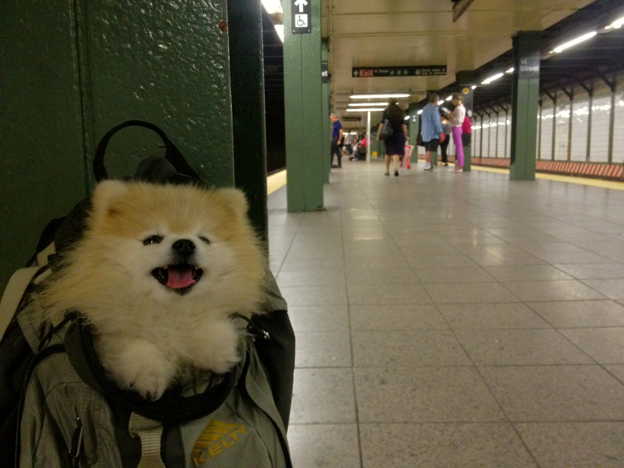 HAI GUYS, DOES THE Q TRAIN STOP HERE?