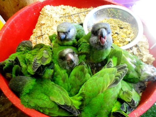 """jthurteau:  likethepresident:  environmint:  I thought this was a picture of salad until I look closer!  I m not okay with this. """"Hey, This Is A Bird Party! No Humans Allowed!"""""""