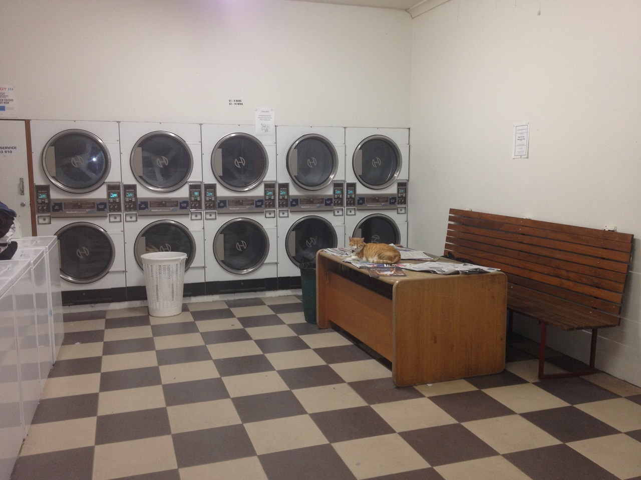 Laundromat cat cares for your cleanliness