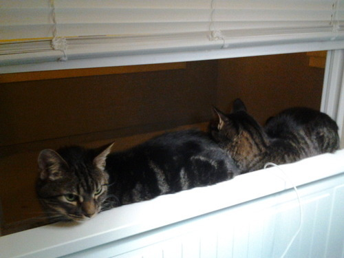 get out of there cats. i was just trying to get some cool air in the house.