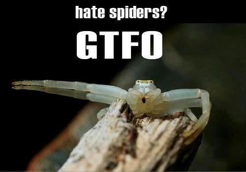 Spider don't tolerate no discrimination!