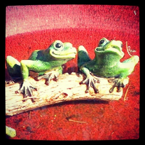 Froggies #frog #kitsch #kitschy #birdbath #garden (Taken with Instagram)