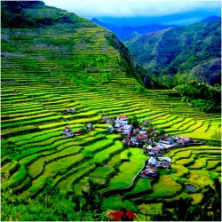 Batad Rice Terraces of BanaueIfugao Province, Philippines