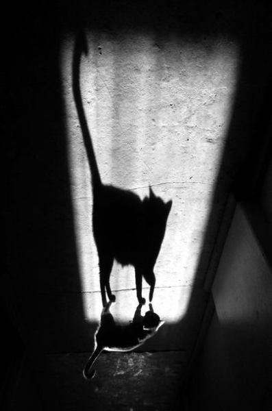 yasunao:  bednij: тень и её кот