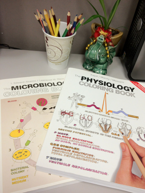 Sneak preview of my weekend at the office: Physiology and microbiology coloring books from my boyfriend, colored pencils from a nice guy in GSD, and my coworker's cute elephant planter.