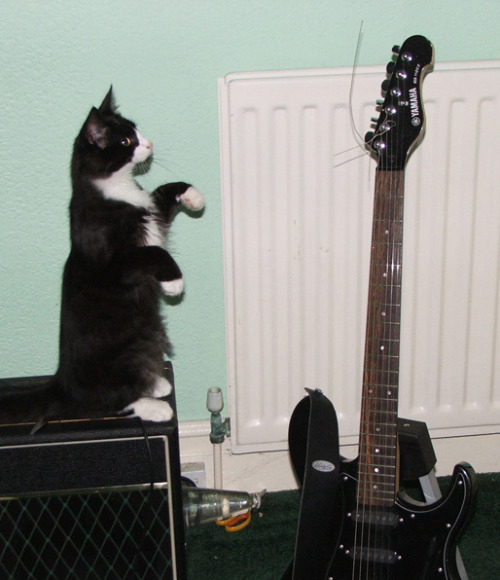 no cat. your musical ambitions are in vain. you do not have thumbs.