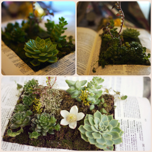 hermajestychopsticks:  Ah, my very own little garden :)