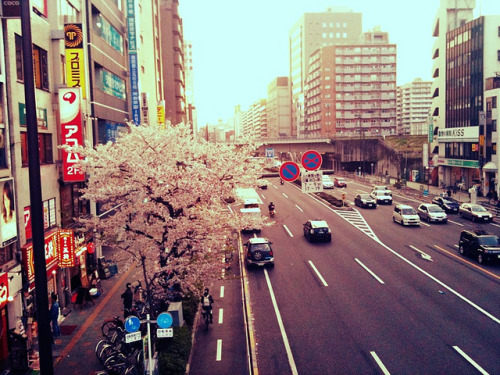 hislolita:  in-city SAKURA :: CLASSICALver. by Nixie+ on Flickr.