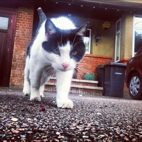 This #little #dude #cat hangs out by #highgate station all the time, and comes up to EVERYONE who walks past him! #rad #friendly #catsofinstagram  (Taken with Instagram)