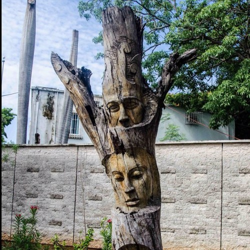 #surreal #tree in #merida #yucatan (Pris avec Instagram)