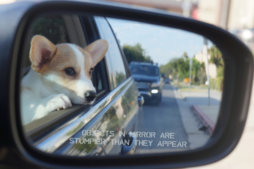 submitted by: corgnelius.tumblr.com