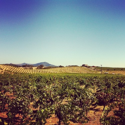 Enjoying the view and some wine. #travel (Taken with Instagram at Ridge Vineyards - Lytton Springs)