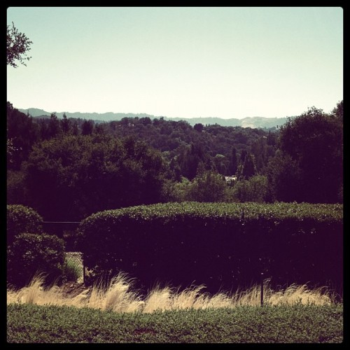 This isn't a bad view to have from your yard (Taken with Instagram)
