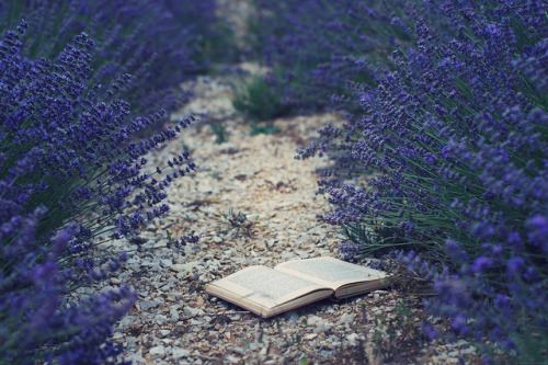 mykindafairytalee:  The lost book by Siréliss on Flickr.