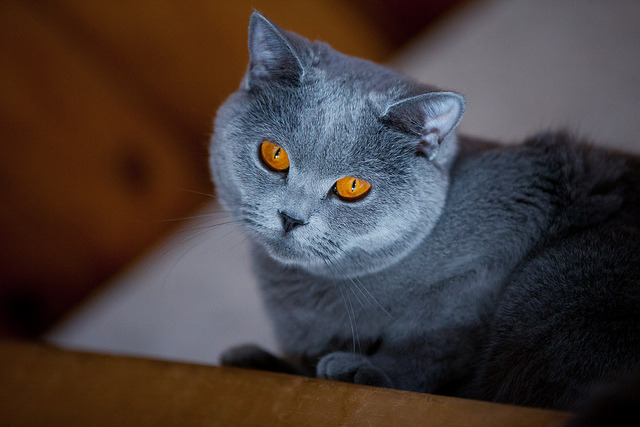 photogenicfelines:  (Zebranete)