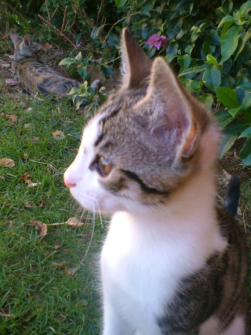 pruneloaf:  aw just found a load of pictures from 2004 when i had 8 cute kittens and i named this one harvey and the one in the background Sabrina from Sabrina the teenage witch haha
