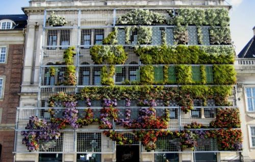 urbanination:  This living wall in Copenhagen outlines a map of Europe.
