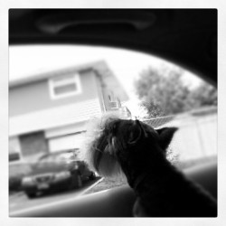 #pondering #puppy  (Taken with Instagram)