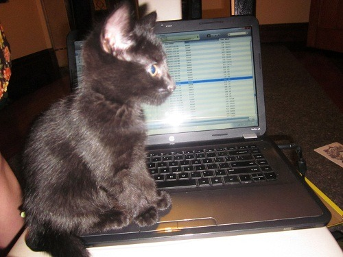 getoutoftherecat:  get off there cat. you do not know how to work itunes. you don't even listen to music