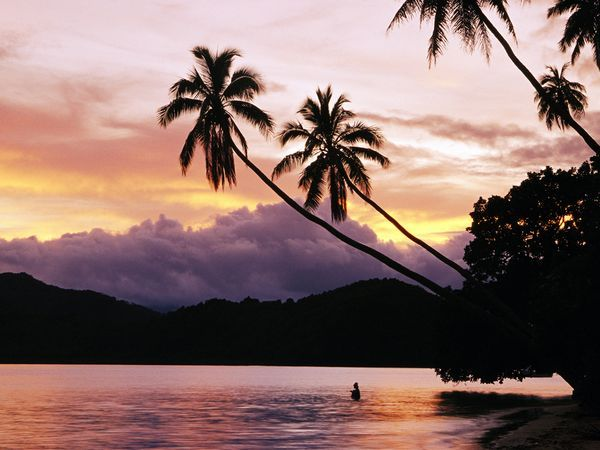 Palm Trees, Fiji | Photograph by Mark Cosslett, National Geographic Image Collection