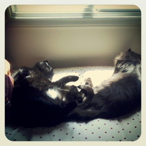 My cats are too cute in the sun (Taken with Instagram)