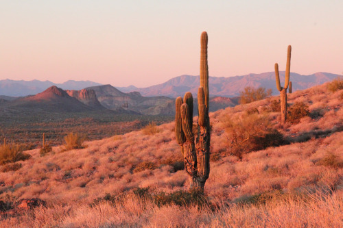 arizonanature:  Desert sunset