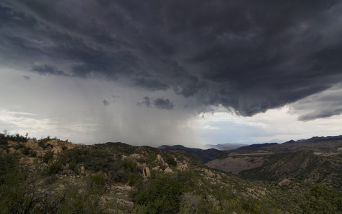 arizonanature:  Monsoon
