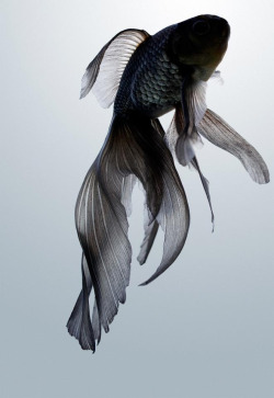 synthetic-doll:  what a fancy fish