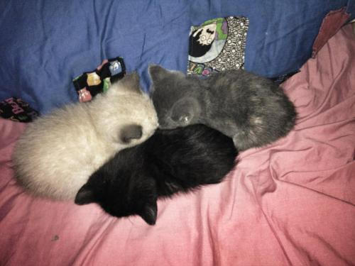 The Sleeping Tri-Kitten Formation