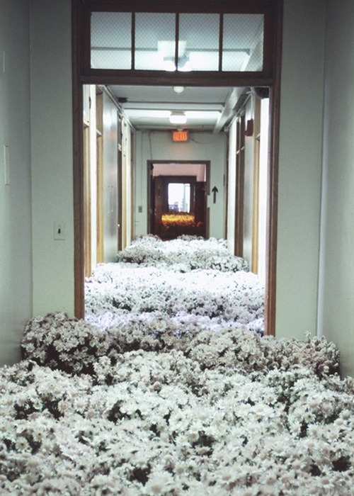 irrelavant:  the-white-nigger:   28,000 potted flowers were scattered around a mental health center before it was demolished  i wonder if that's true  this is so pretty omg