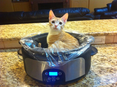 getoutoftherecat:  get out of there cat. you are not a pot roast. where are your vegetables.