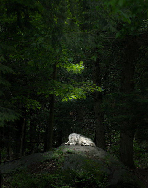theanimalblog:  Sleeping Beauty by ~Pauken